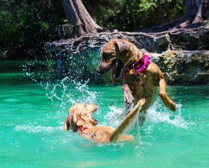 dog swimming water