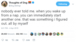 thoughts of dog 8
