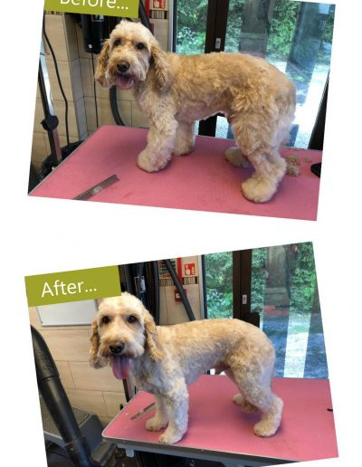 dog-grooming-chesterfield-1
