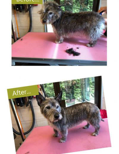 dog-grooming-chesterfield-2