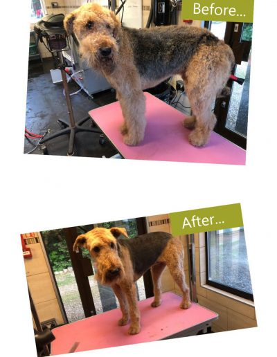 dog-grooming-chesterfield-3