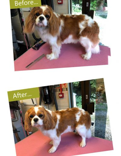 dog-grooming-chesterfield-4