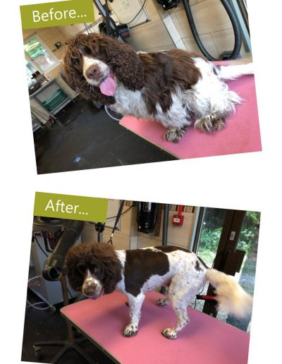 dog-grooming-chesterfield-6