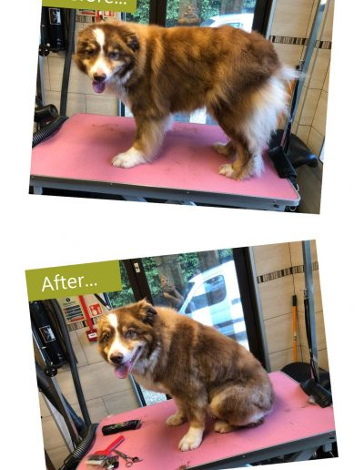 dog-grooming-chesterfield-7