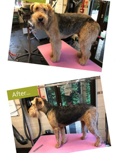 dog-grooming-chesterfield-8