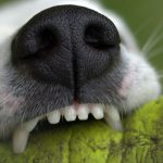 How To Keep Your Dog's Teeth Healthy