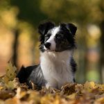 Autumn activities dog kennels Chesterfield