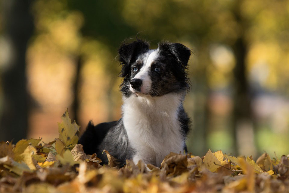 Great Autumn Activities For You And Your Dog