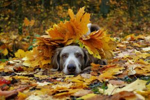 leaf pile jumping dog kennels Chesterfield