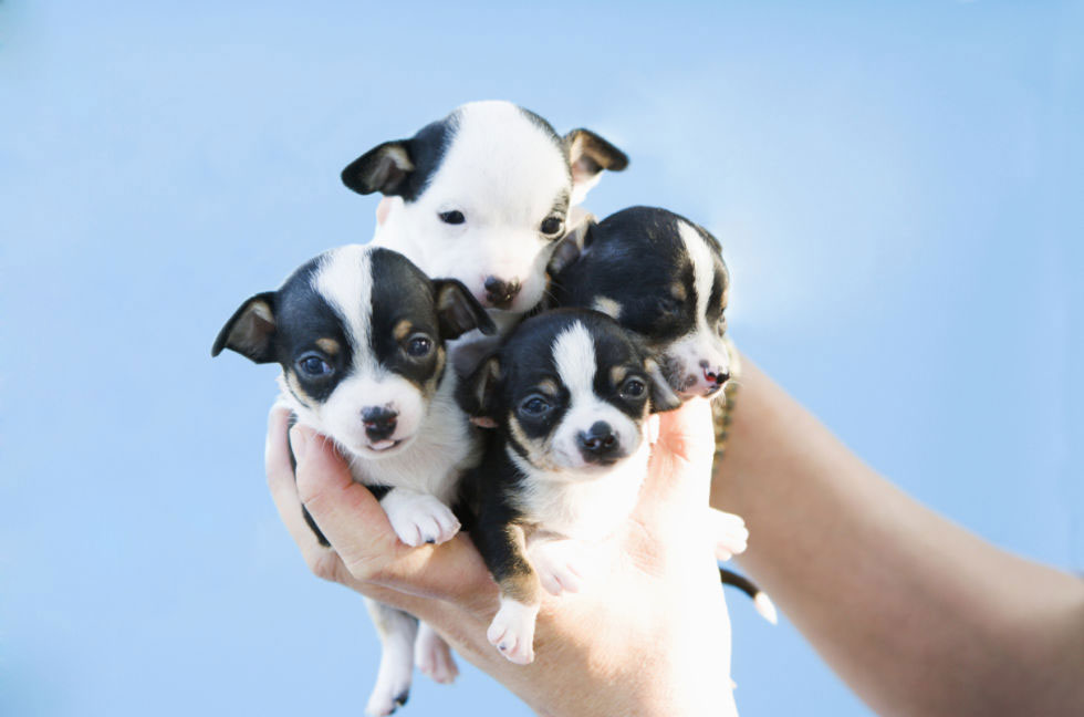 tiny puppy dog kennels Chesterfield