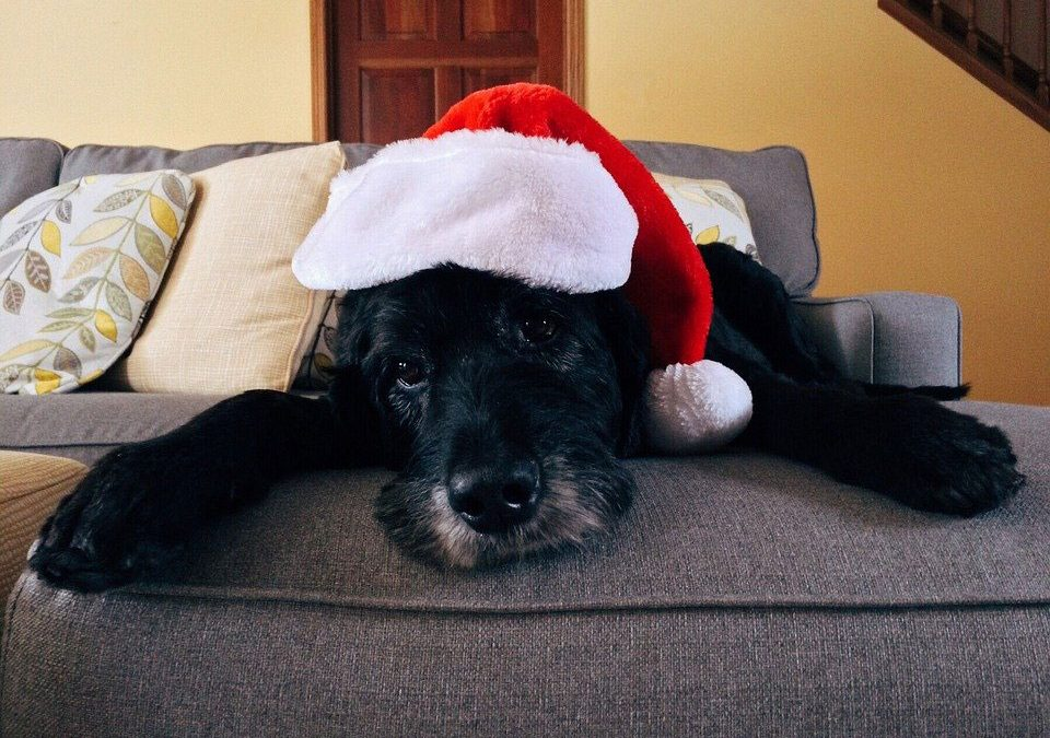 Have You Dog Proofed Ready For The Christmas Season?