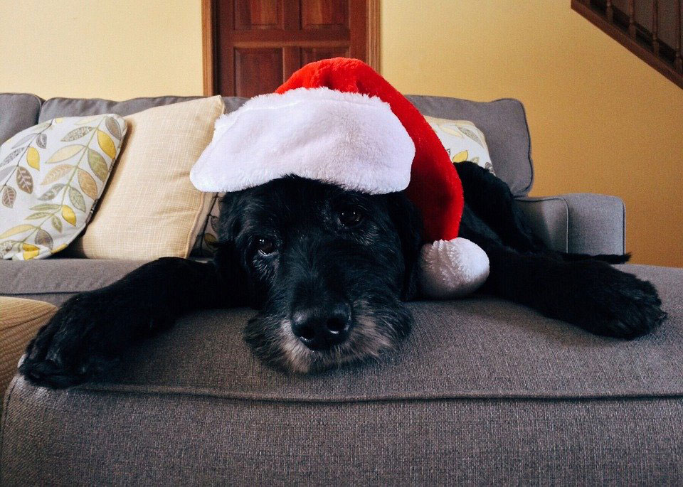 Christmas tips dog kennels Chesterfield
