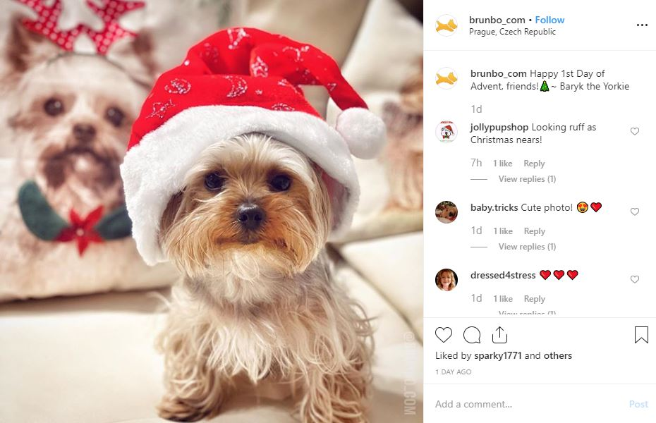 dog kennels Chesterfield Christmas dogs
