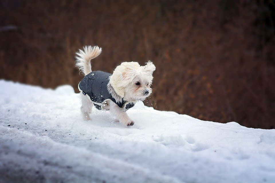Top Tips For Your Dog Over The Cold Winter Months