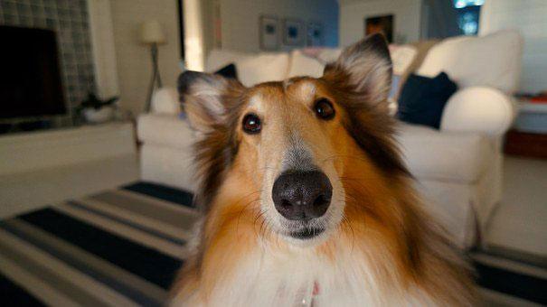 17 Traits of a Happy Dog