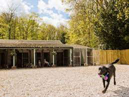 Healthy Coat Dog Kennels Chesterfield